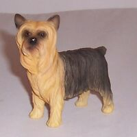 Best of Breed - Yorkshire Terrier