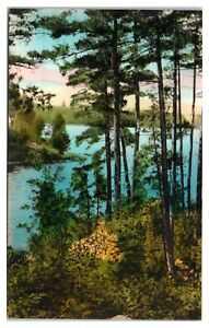 Early 1900s Virgin Pines, Superior National Forest MN BWCA Hand-Colored Postcard