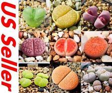 100 Pcs Succulents Mixed Seeds Succulent Cactus Seed T22, Home Garden Perennial