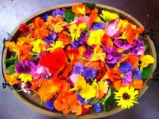 WILDBLUMEN  Mischung über 500 Samen, bunte Wiese, Bienenwiese, für 25-50 qm