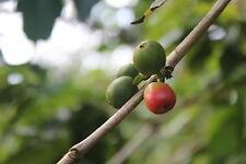 10# Kenya AA Kieni micro-lot  unroasted green coffee.  Direct Trade. 10lb.