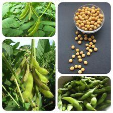 Sojabohne Glycine max Nutzpflanze öl- u. eiweißlieferndes Nahrungsmittel Edamame