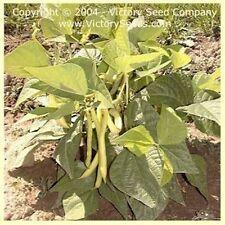 50 Bean Golden Wax Seeds