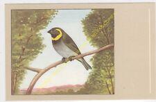 Oiseau Bird Petit Chanteur de Cuba Euethia canora n22