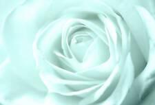 LARGE DUCK EGG BLUE SOFT ROSE FLORAL CANVAS framed A1