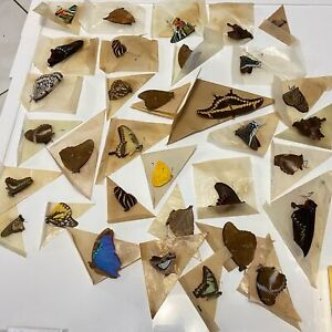 Vintage RARE Estate Lot Real Butterfly Taxidermy Collectors Specimens