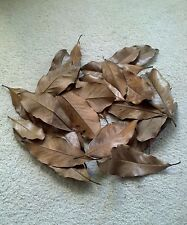 Magnolia leaves dried - Group of 25 -Great for holiday decorations;wreath; craft