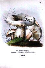 PILZE:CHAMPIGNONS-MUSHROOMS-FUNGI-5 BLATT FARBLITHOS:UM 1890(1900- je:17x11,5cm.