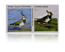 No.10 Northern Lapwing Enamelled Pin Badge | Wader Quest Bird Pin - Not RSPB