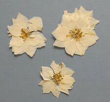Real Pressed Flowers Dried 25 White Larkspur Organic Phone Case Art Crafts Diy