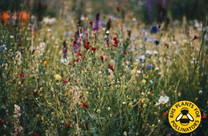 🌸 100% Wild Flower Seeds 🌸Throw Grow NO Grass plants Cornflower Annual Meadow
