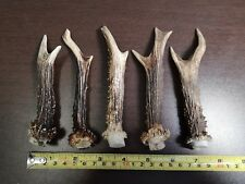 Lot of 5 Small Roe Antlers For Art Decorations Knife Dagger Door Handles # 4067