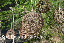 Handmade Rustic Jute Christmas Balls Set of 3 Holiday Christmas Tree Ornament