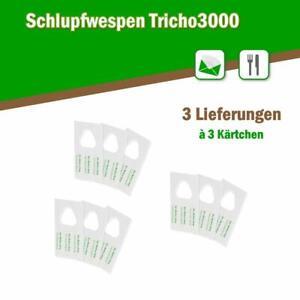 Schlupfwespen gegen Lebensmittelmotten 3 Karten x 3 Lieferungen