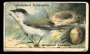 Tobacco Card,Gallaher, BIRDS NESTS & EGGS, 1919, Blackcap Warbler, #35