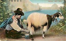 1905-1915 Printed Postcard Maltese Milk Seller Boy Milking Dairy Goat Unposted