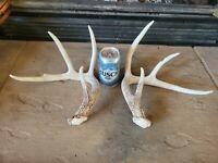 Wild 8 Point Whitetail Deer Antler Shed Rack Horn Set Decor Man Cave Decor