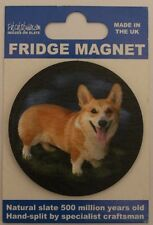 Welsh Corgie Standing - Dog - Fridge Magnet - Welsh Slate