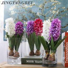 Hyacinth Seeds Garden Indoor Outdoor Plant Hyacinthus 100pcs/bag Flower Bonsai
