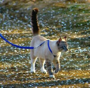 Cat Harness and Bungee Leash Blue Black Medium PetSafe COME WITH ME KITTY