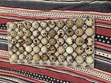 Texas A&M quail hatching eggs 48+