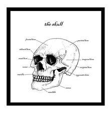 Skull Greetings Card Anatomy Science Osteology Anthropology Halloween Horror