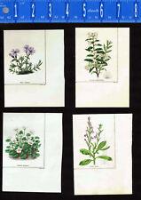 1831 Benjamin Maund Botanical Flowers  (Set of 4) Lot A