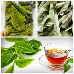 Organic Homemade Dried Guava Leaves/powder Fresh Green Anti diabetic Ceylon 50pc