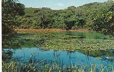 Lily Ponds, BOSHERSTON, Pembrokeshire