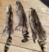 Professionally Soft Tanned North American Raccoon pelt