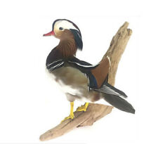 Standing Mandarin Duck Professional Taxidermy Animal Statue Home or Office Gift