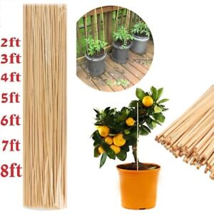 Bamboo Garden Canes Strong Professional Garden Plant Support Sticks In All Sizes