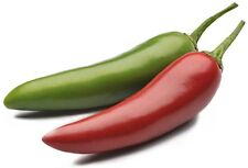 JALAPENO CHILLI HEIRLOOM SEEDS MILD TO HOT CAPSICUM ANNUUM SEED 35 SEED PACK