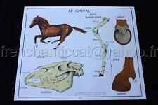 L821 Affiche scolaire ancienne cheval squelette sabot Lapin Rossignol 90*75