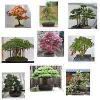i! großer Bonsai-Anfänger-Set !i Samen Exoten 9 leicht zu ziehende Sorten Baum