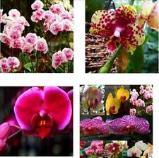 Diffenent Mixed Butterfly Orchid Bonsai Flowers Orchid Seeds Butterfly Orchid