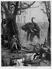 WOUNDED ELEPHANT CHARGING HUNTER NATIVES GUIDES ELEPHANT BIG GAME HUNTING SPORT