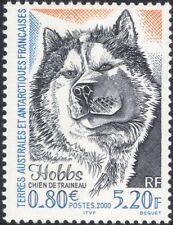 """FSAT/TAAF 2000 """"Hobbs""""/Sledge Dog/Sled/Working Animals/Nature/Husky 1v (n31768)"""