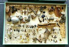 grande boîte ancienne insectes sous verre curiosités nids