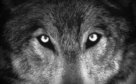 Greywolf Comics, Pulps & Posters