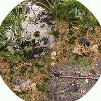 Tuff Tray Vinyl Mat Insert - Wildlife and Minibeasts - Black Tray not included
