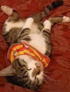 BIRD PROTECTOR Cat collar - UNIQUE UVR DESIGN  bird safe for Cats  break-free