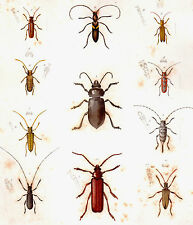1850's vintage INSECTS original handpainted engraving - Plate #34