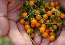AJI CHARAPITA pure seeds, rare wild chili