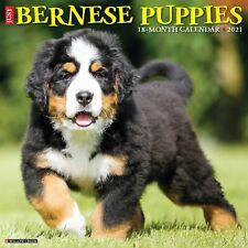 Just Bernese Mountain Pups (dog breed calendar) 2021 Wall Calendar (Free Ship)