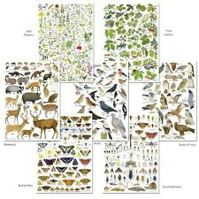 More details for british wildlife identification posters birds animals insects wild flowers trees