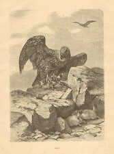 Eagle Preys On Rodents, Mountain View, Vintage 1878 French Antique Art Print