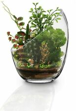 "6.9"" x 5.5"" Slant Cut Bowl Glass Vase Plant Terrarium Container for Garden Decor"
