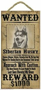 """Wanted Western Poster Style Siberian Husky Funny Dog Pet Sign Plaque 5""""x10"""""""