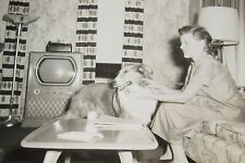 Retro Rough Collie Dog Vintage Living Room Old Tv Set Interior Photo Snapshot